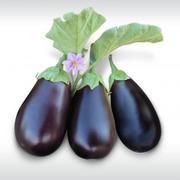 Семена баклажана PRADO F1 / ПРАДО F1 фирмы Китано